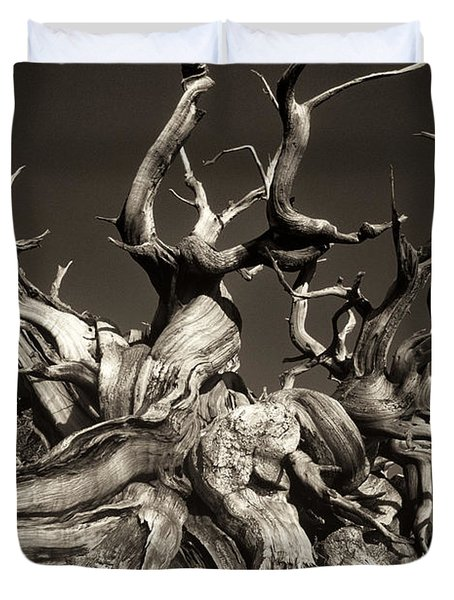Duvet Cover featuring the photograph Ancient Bristlecone Pine In Black And White by Dave Welling