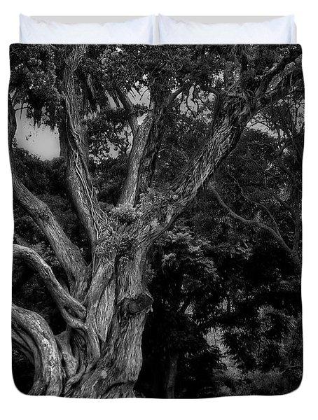Ancient Tree Duvet Cover