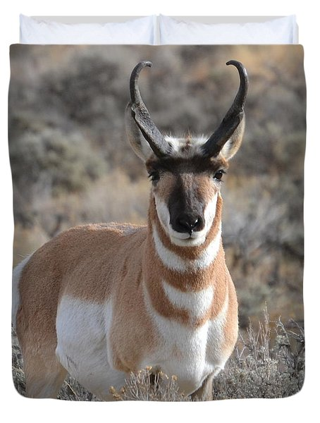 ...and The Antelope Play Duvet Cover