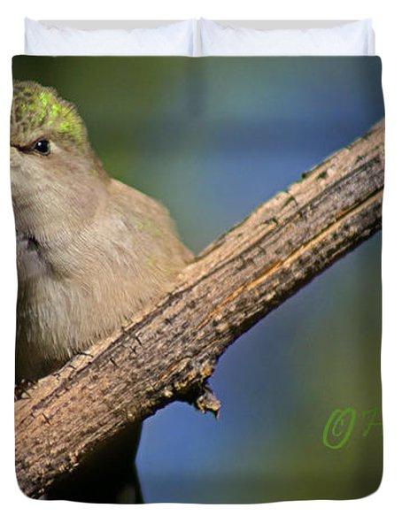 Anna's Hummingbird Baby Duvet Cover by Heather Coen