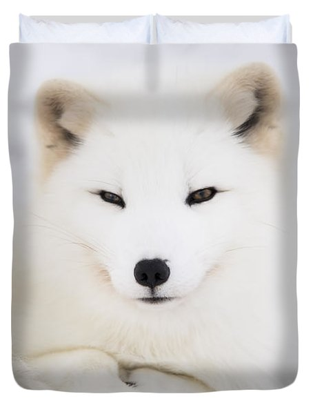 Arctic Fox Resting In The Snow Duvet Cover