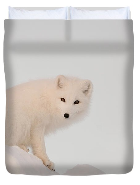 Arctic Fox Stands In Late Afternoon Sun Duvet Cover