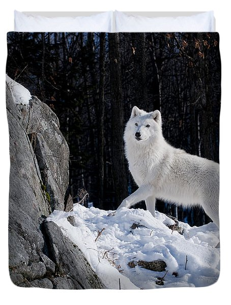 Duvet Cover featuring the photograph Arctic Wolf On Rock Cliff by Wolves Only