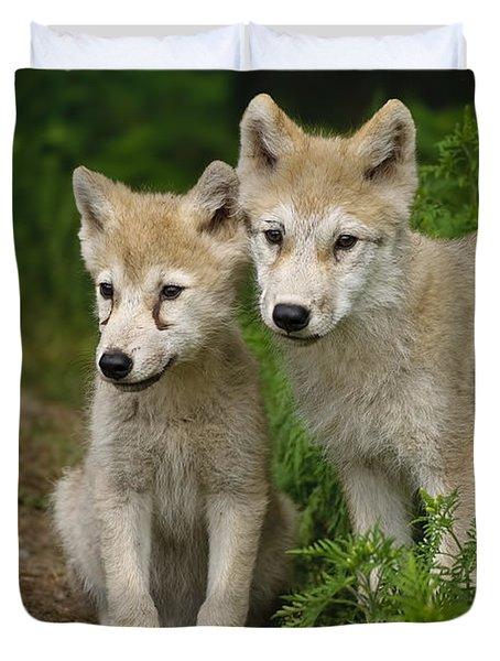 Arctic Wolf Puppies Duvet Cover