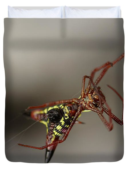 Arrow-shaped Micrathena Spider Starting A Web Duvet Cover