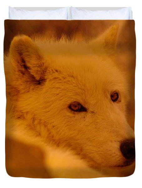 Artic Wolf  Duvet Cover by Jeff Swan