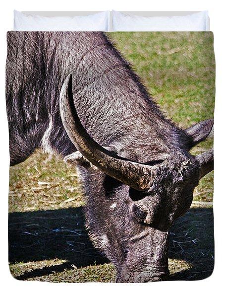 Asian Water Buffalo  Duvet Cover by Miroslava Jurcik