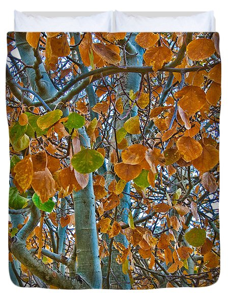 Duvet Cover featuring the photograph Aspen Leaves In The Fall by Mae Wertz