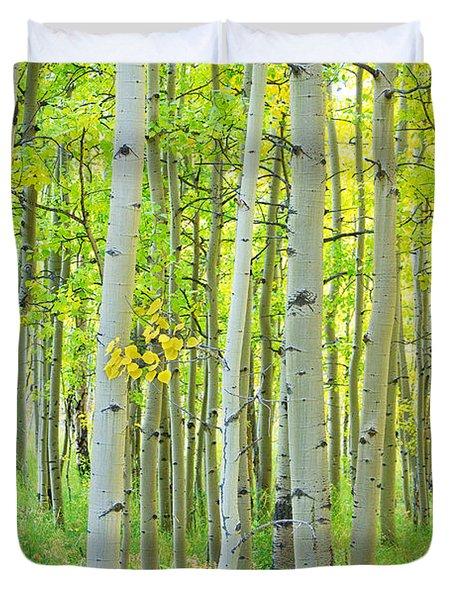 Aspen Tree Forest Autumn Time  Duvet Cover