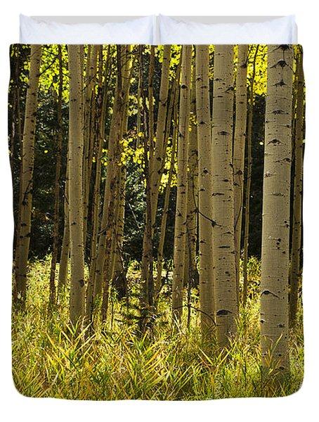 Aspen Trees All In A Row Duvet Cover