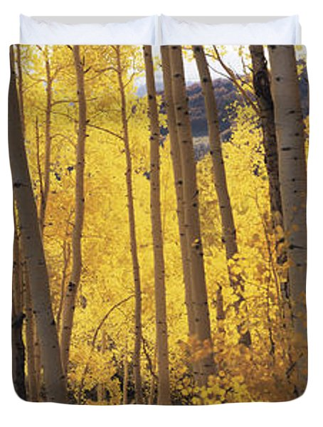 Aspen Trees In Autumn, Colorado, Usa Duvet Cover
