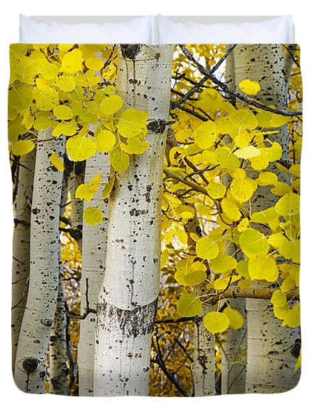 Aspens At Autumn Duvet Cover
