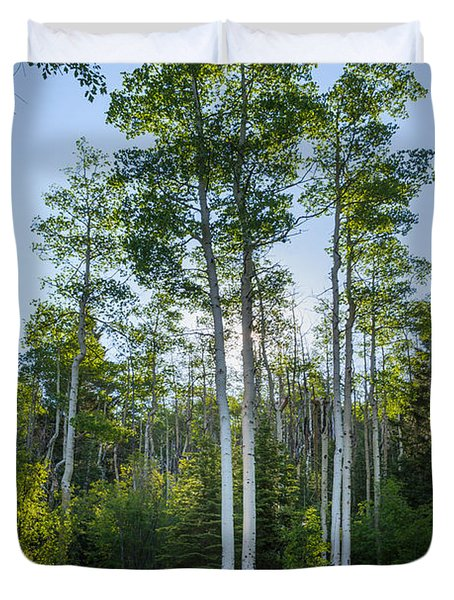 Aspens At Sunrise 1 - Santa Fe New Mexico Duvet Cover by Brian Harig