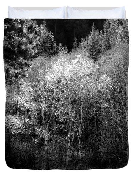 Aspens In Morning Light Bw Duvet Cover