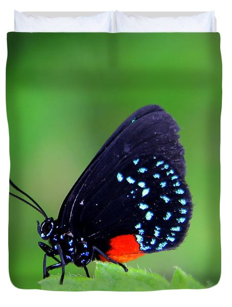 Atala Butterfly Duvet Cover by Sean Allen
