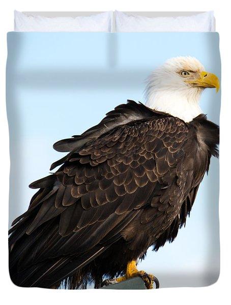 Attractive Bald Eagle Duvet Cover by Debra  Miller