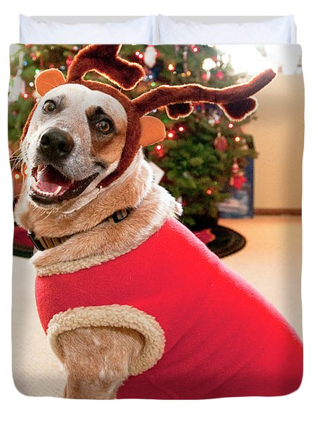 Auggie The Dog With Reindeer Outfit Duvet Cover