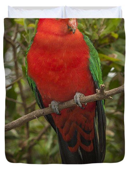 Australian King Parrot Male Dandenong Duvet Cover