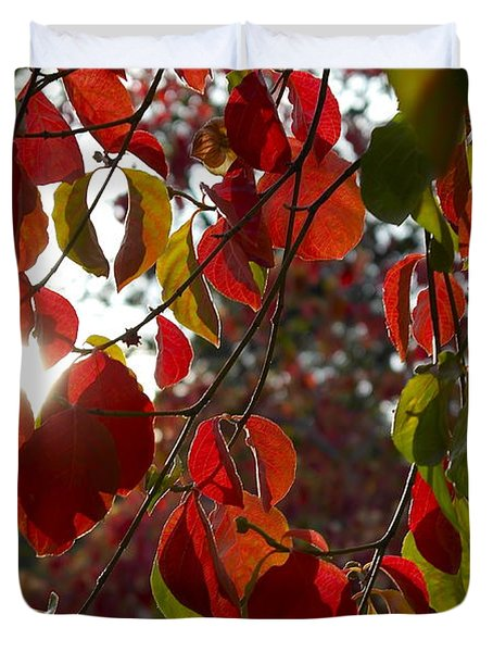 Autumn Dogwood In Evening Light Duvet Cover