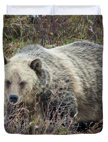 Duvet Cover featuring the photograph Autumn Grizzly by Jack Bell