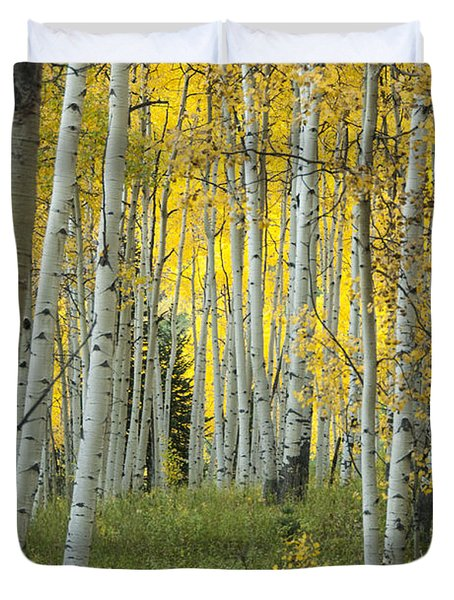 Autumn In The Aspen Grove Duvet Cover