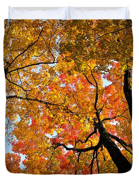 Autumn Maple Trees Duvet Cover by Elena Elisseeva