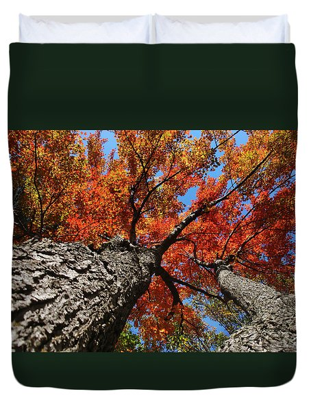 Autumn Nature Maple Trees Duvet Cover by Christina Rollo