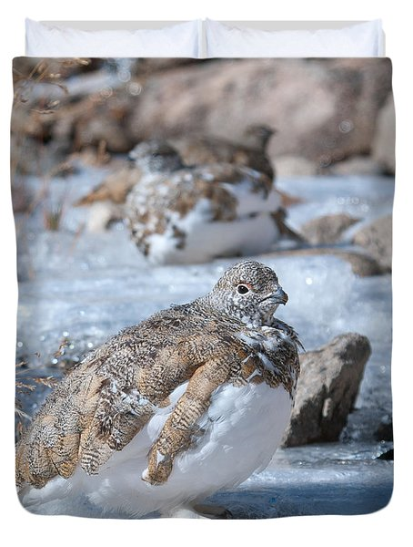 Autumn Plumage White-tailed Ptarmigan Duvet Cover