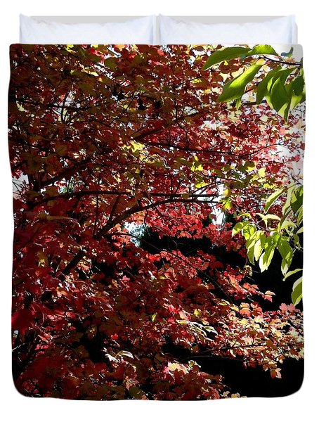 Autumn Snowball Bush Duvet Cover by Will Borden