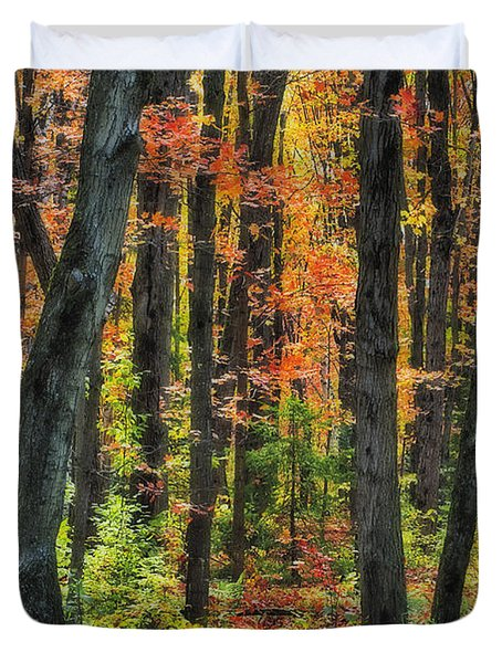 Autumn Sugar Maple, Yellow Birch And Duvet Cover by Thomas Kitchin & Victoria Hurst