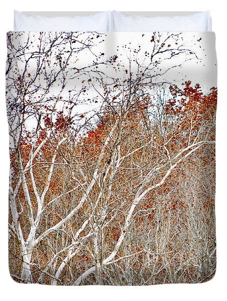 Duvet Cover featuring the photograph Autumn Sycamores by Bruce Patrick Smith