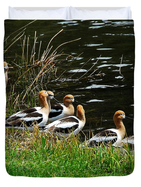 Duvet Cover featuring the photograph Avocets by Sam Rosen