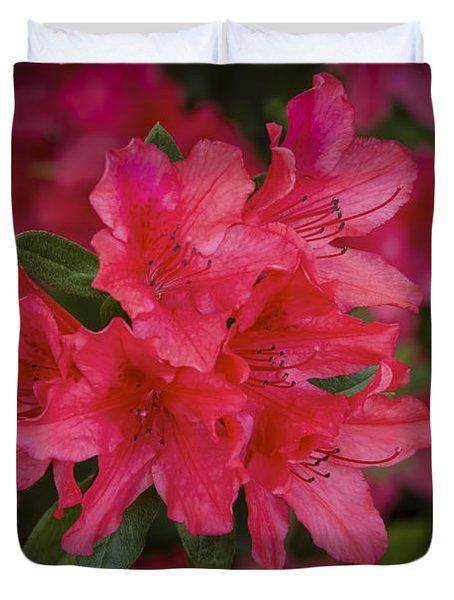 Azaleas 1 Duvet Cover