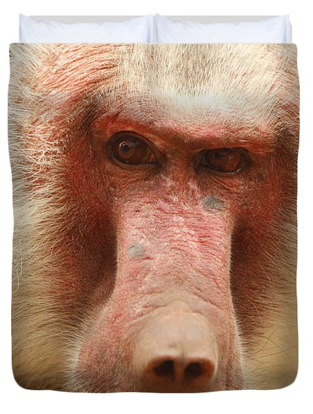 Baboon Duvet Cover by Craig Dingle