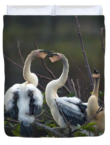 Baby Anhinga Duvet Cover by Mark Newman