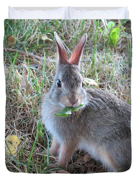 Baby Bunny Eating Dandelion #02 Duvet Cover by Ausra Huntington nee Paulauskaite