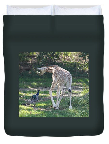 Baby Giraffe And Peacock Out For A Walk Duvet Cover by John Telfer