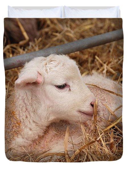 Baby Lamb Duvet Cover