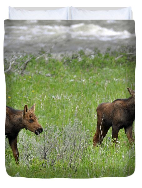 Baby Moose On The Banks Of The Gallatin Duvet Cover