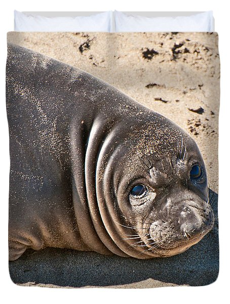 Baby Northern Elephant Seals Mirounga Angustirostris At The Piedras Blancas Beach Duvet Cover by Jamie Pham