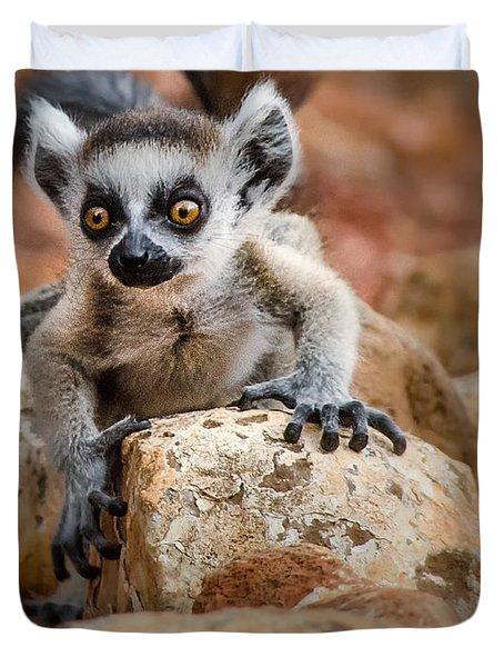 Baby Ringtail Lemur Duvet Cover