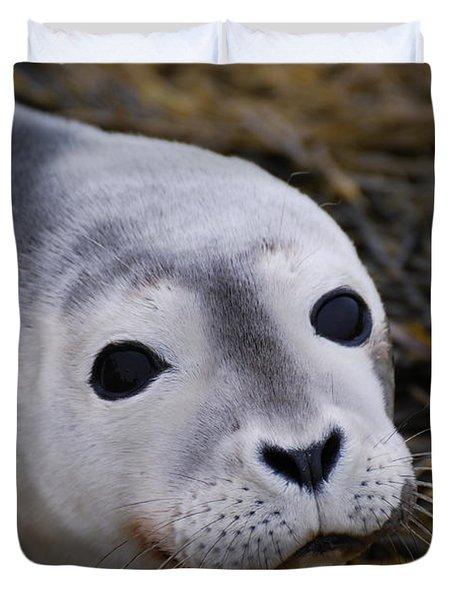 Baby Seal Duvet Cover by DejaVu Designs