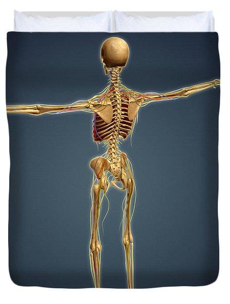 Back View Of Human Skeleton Duvet Cover by Stocktrek Images