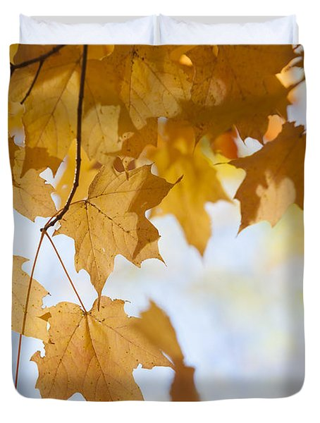 Backlit Maple Leaves In Fall Duvet Cover by Elena Elisseeva