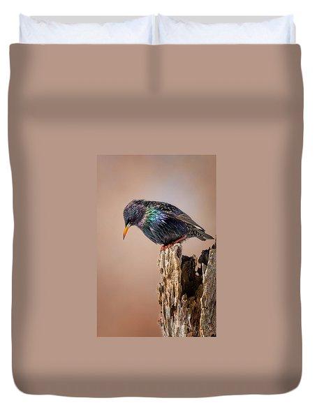 Backyard Birds European Starling Duvet Cover