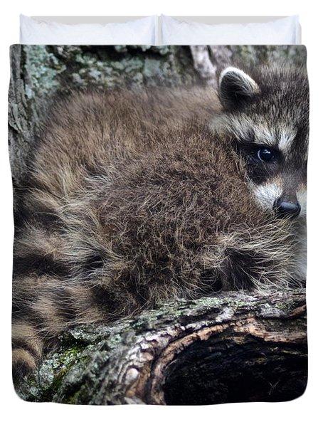 backyard raccoon duvet cover by frozen in time fine art photography