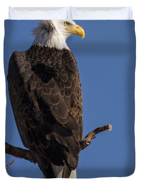 Bald Eagle 1 Duvet Cover