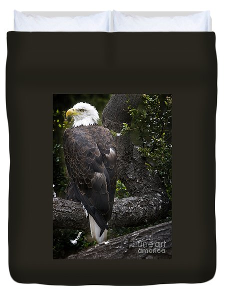 Bald Eagle Duvet Cover by David Millenheft