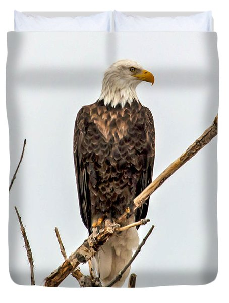 Bald Eagle On A Branch Duvet Cover