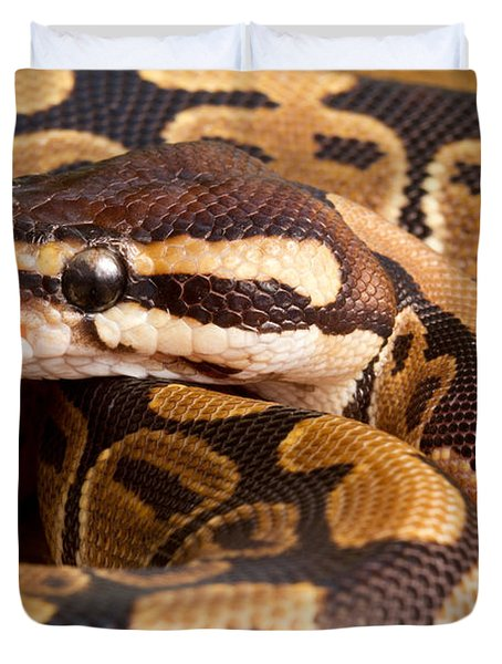 Ball Python Python Regius Close Duvet Cover by David Kenny